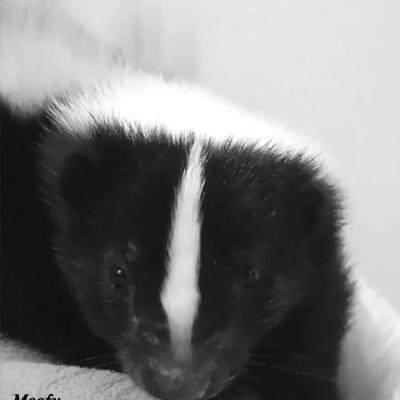 Moofy